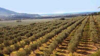 Photo of Il mondo dell'agricoltura 2.0
