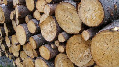Photo of La tratta del legname perduto: riacquistiamo dall'Austria il nostro legname