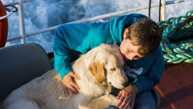 Photo of Uk, fino a sette anni di carcere per chi ruba un cane o un gatto