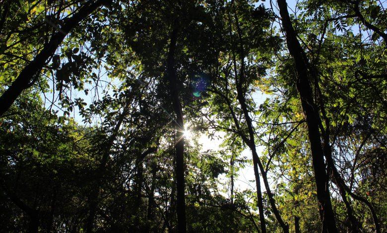 Photo of Terapia forestale per combattere ansia e depressione