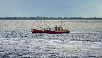 Photo of I pescatori britannici danneggiati dai ritardi per l'export in Europa
