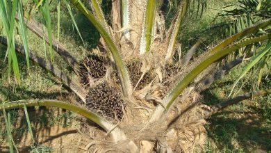 Photo of La sfida dell'olio: da quello di palma a quello di girasole