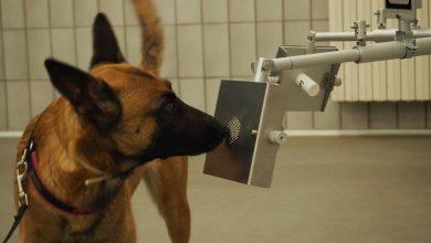 Photo of In arrivo all'aeroporto di Cuneo i cani anti-Covid: fiutano i positivi con un'esattezza del 95%