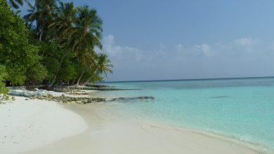 Photo of Blue Estate: la prima isola artificiale a impatto zero