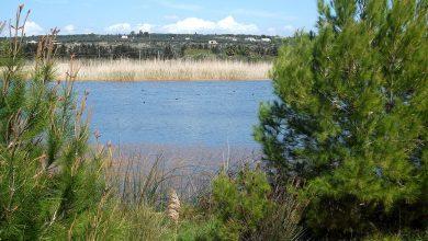 Photo of Recovery, il piano Coldiretti di mille bacini di raccolta d'acqua