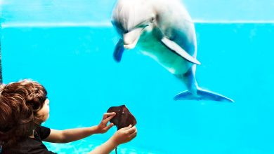 Photo of Genova, all'acquario anche i delfini patiscono l'assenza di visitatori